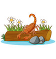 scorpion on white background vector image vector image