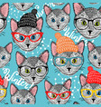 seamless winter pattern with cat in hat vector image