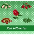 Collection of ripe juicy delicious sweet berries vector image vector image