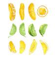 fruit set with lime orange and lemon slices vector image