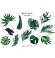 leaves greenery single arrangement elements fius vector image vector image
