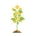 money coin tree growing tree vector image