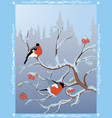 winter postcard with bullfinches vector image vector image