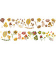 autumn plant set forest cute abstract leaves vector image