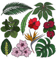 collection of hand drawn tropical flowers vector image vector image