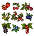 fresh garden and wild berry fruits vector image vector image