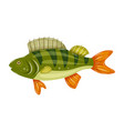 freshwater flat icon colorful perch fish isolated vector image vector image