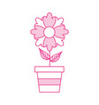 potted flower plant decoration botanical flora vector image