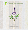 pure essential oil collection vitex wooden vector image vector image