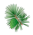 sprig of pine with pinecone vector image