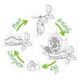 the metamorphosis of the butterfly vector image vector image