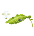 banana frog banner vector image