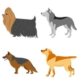 Collection of purebred dogs vector image