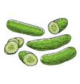 cucumbers fresh vegetables food vector image
