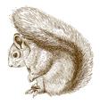 engraving squirrel vector image