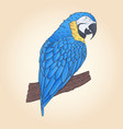 hand drawn macaw parrot sitting on branch vector image