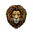 head handdrawn angry lion vector image