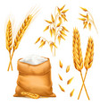 realistic bunch of wheat oats or barley with bag vector image vector image