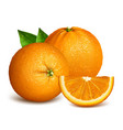 whole ripe oranges and slices vector image vector image