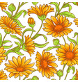 calendula flower pattern vector image vector image