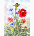 watercolor painting with red poppies and blue vector image vector image