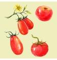 Watercolor tomato set vector image