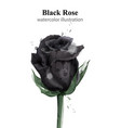 black roses watercolor isolated stylish vector image vector image