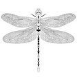 elegant dragonfly insect detailed sketch in black vector image
