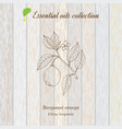 pure essential oil collection bergamot wooden vector image vector image