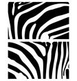 background zebra vector image vector image