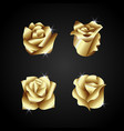 golden rose flower vector image