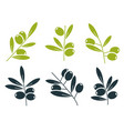 green and black olive branches icons vector image