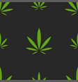 green hemp leaves seamless pattern on black vector image