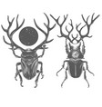 Hand drawn beetles black and white insects vector image
