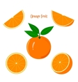 Ripe Juicy Orange Fruit on a White Background vector image vector image