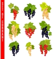 Set of doodle berries Currant vector image