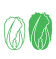 Chinese Cabbage vector image vector image
