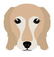 golden retriever avatar vector image vector image