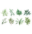 green realistic herbs eucalyptus fern plant vector image vector image
