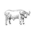 hand drawn buffalo vector image