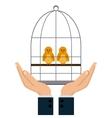 Pet shop and bird design vector image vector image