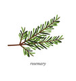 rosemary flat with calligraphy vector image vector image