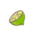 sketch cartoon juicy half of ripe lemon vector image