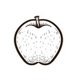 sketch fruit apple isolated coloring book vector image vector image