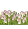 Spring tulips isolated on white EPS 10 vector image