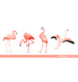 tropical flamingo collection exotic birds design vector image