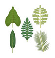 white background with set of palm leaves vector image vector image