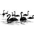 lake with black swans vector image