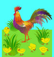 cock and chicken - card vector image