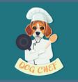 funny beagle dog chef vector image vector image
